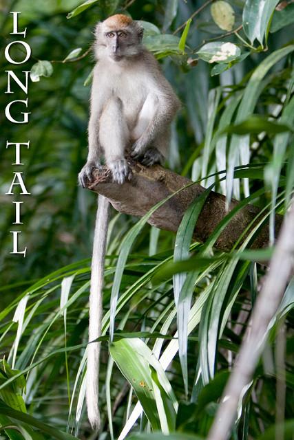 longtail seo